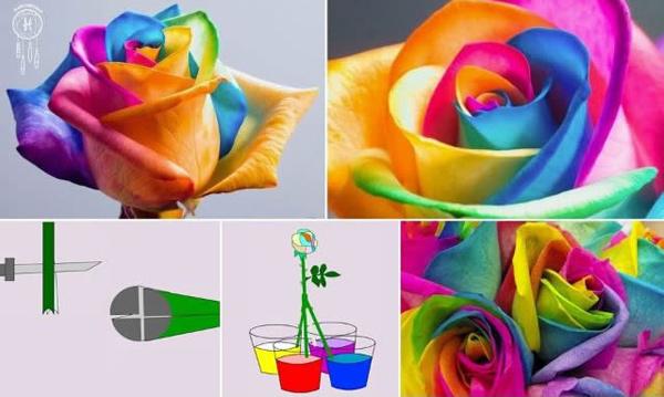 Rosas naturales de colores 1