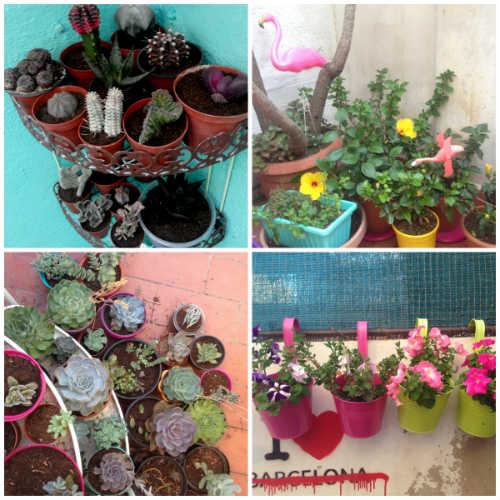 plantas-tropicales-cactus